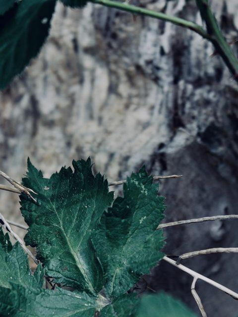Makrobilder von Blumen und Natur